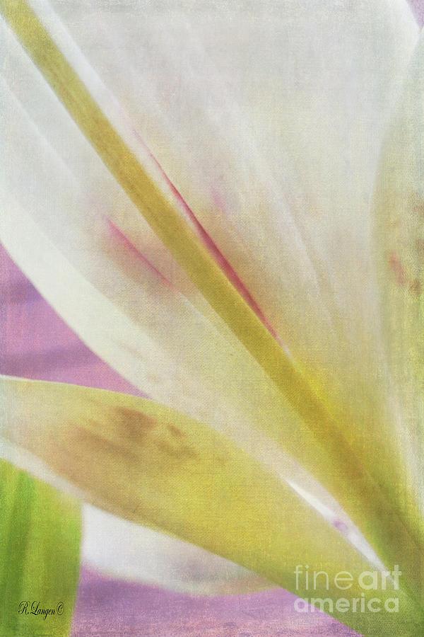 Daylily by Rebecca Langen