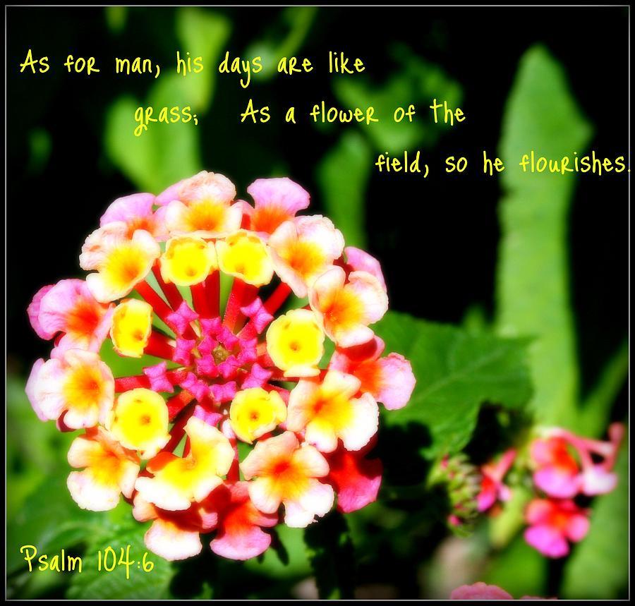 Flowers Photograph - Days Like Grass by Robert Babler