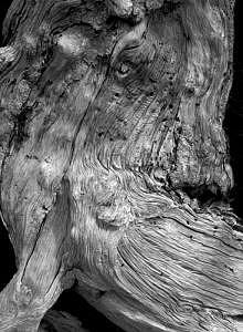 Utah Photograph - Dead Bristlecone Pine by Joe Miller