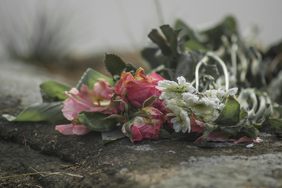 Dead Flowers Photograph by Kyle Rawlins