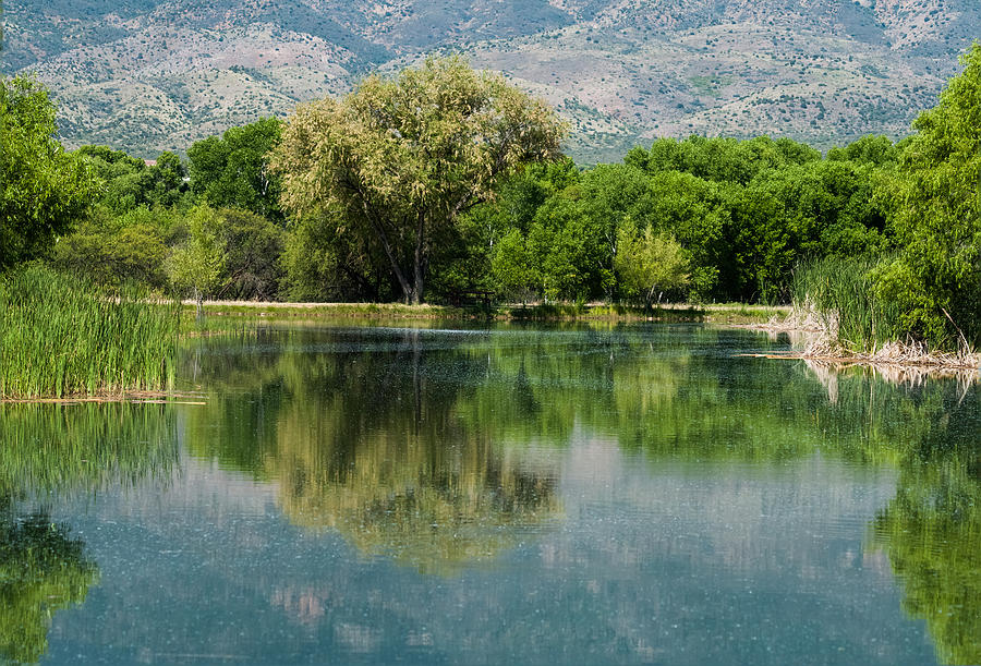 Panoramic Photograph - Dead Horse Ranch State Park by Tam Ryan