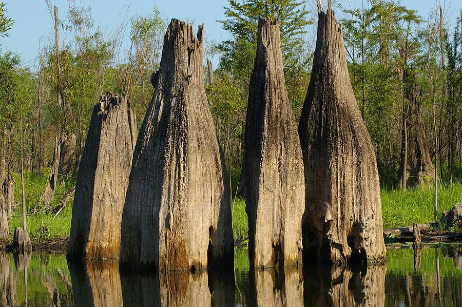 Dead Lakes Photograph - Dead Lake Cypress by Arthurpete Ellison