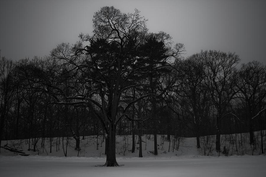 Tree Photograph - Dead of Winter by Christopher Di Nunzio