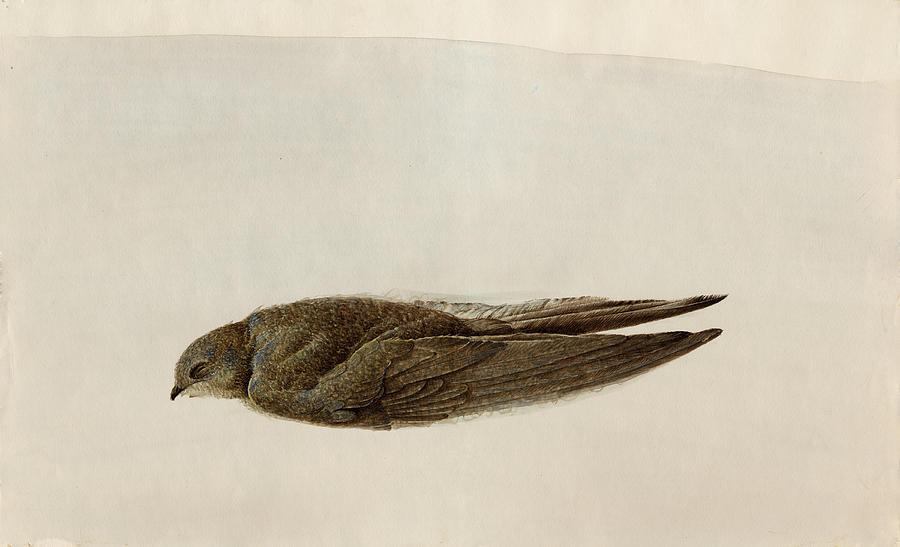 Bird Painting - Dead Song by Inesa Kayuta