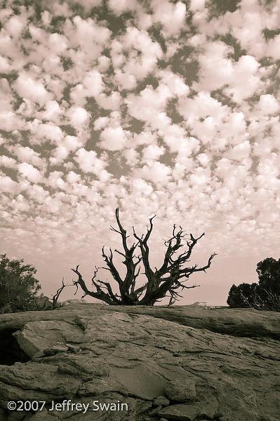 Landscape Photograph - Dead Tree 1   Canyonlands National Park by Jeffrey Swain