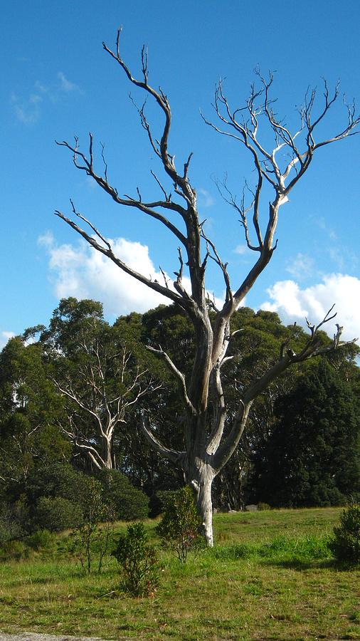 Dead Tree Photograph - Dead Tree by Emma Frost