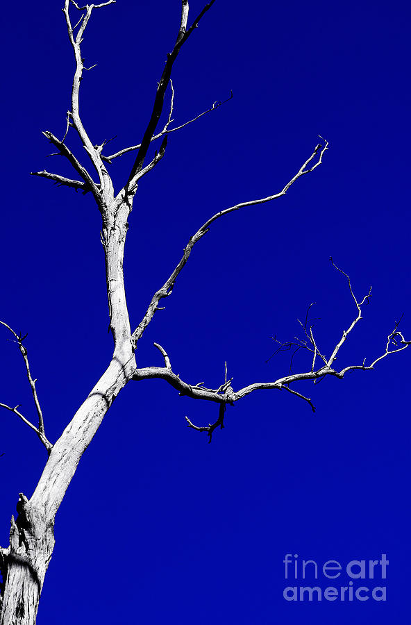 Tree Photograph - Dead Tree by Matthew Syres