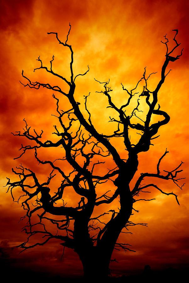Dead Tree Photograph By Meirion Matthias