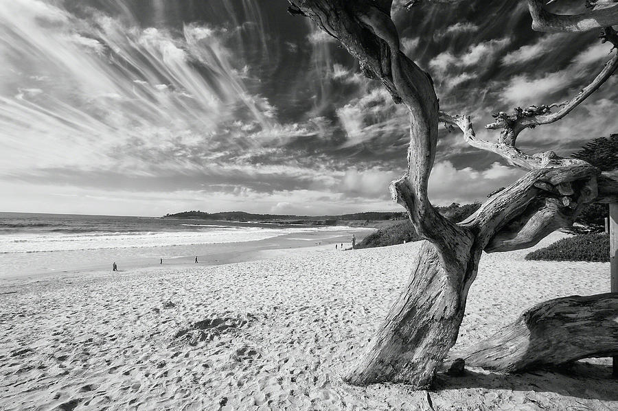 Landscape Photograph - Dead Tree On The Beach by George Oze