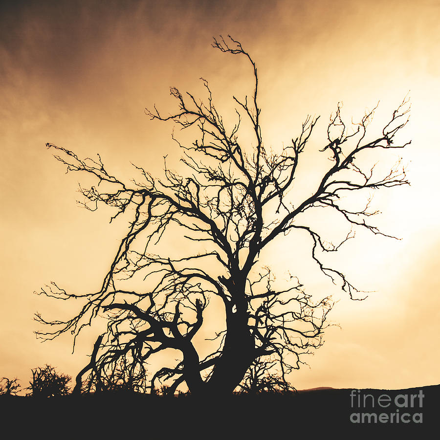 Dead Tree Silhouette Photograph by Jorgo Photography - Wall Art Gallery