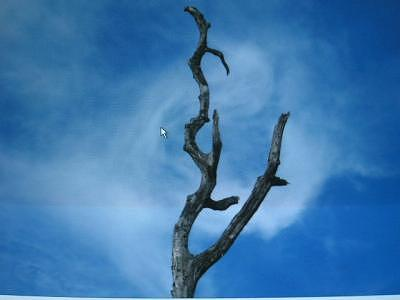 Abstract Photograph - Dead Tree Still Standing Abstract by Taylor Foss