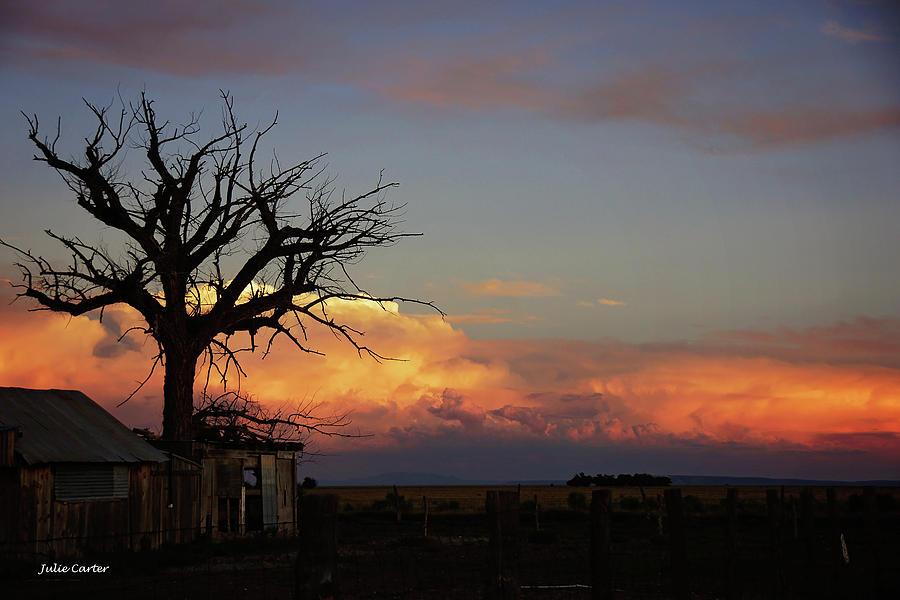 Dead tree sunset by Julie Carter