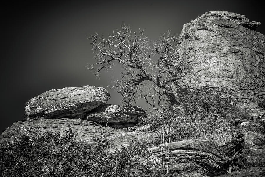 Chiricahua National Monument Photograph - Dead Tree With Boulders by Joseph Smith