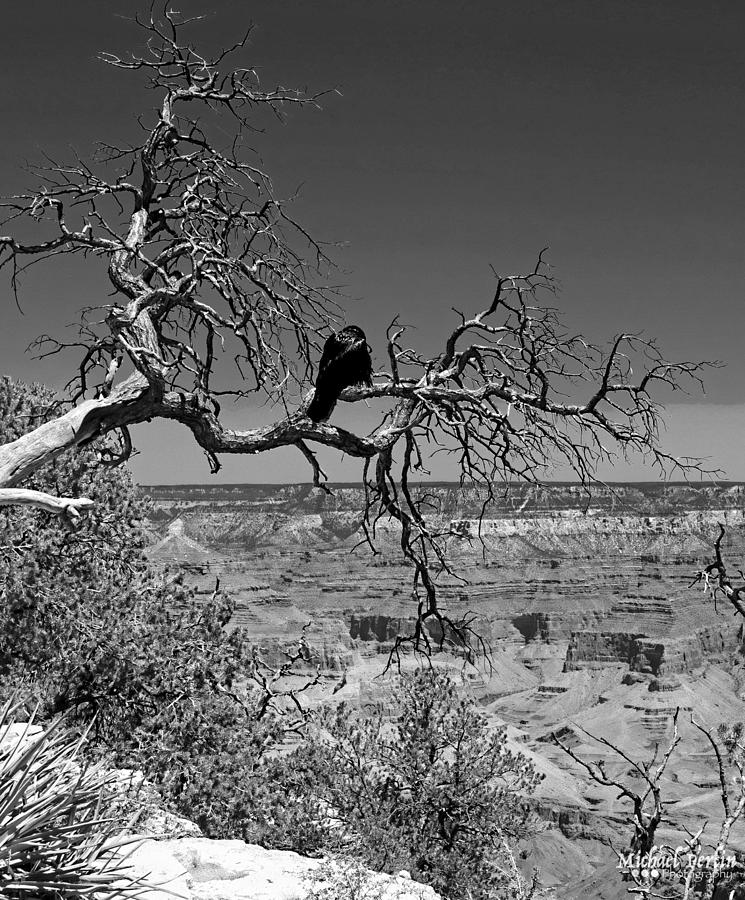 Crows Photograph - Dead Tree With Crow by Michael Perlin