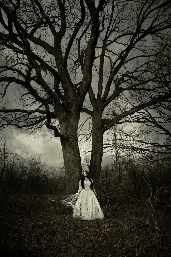 Bride Photograph - Dead Tree by Cambion Art