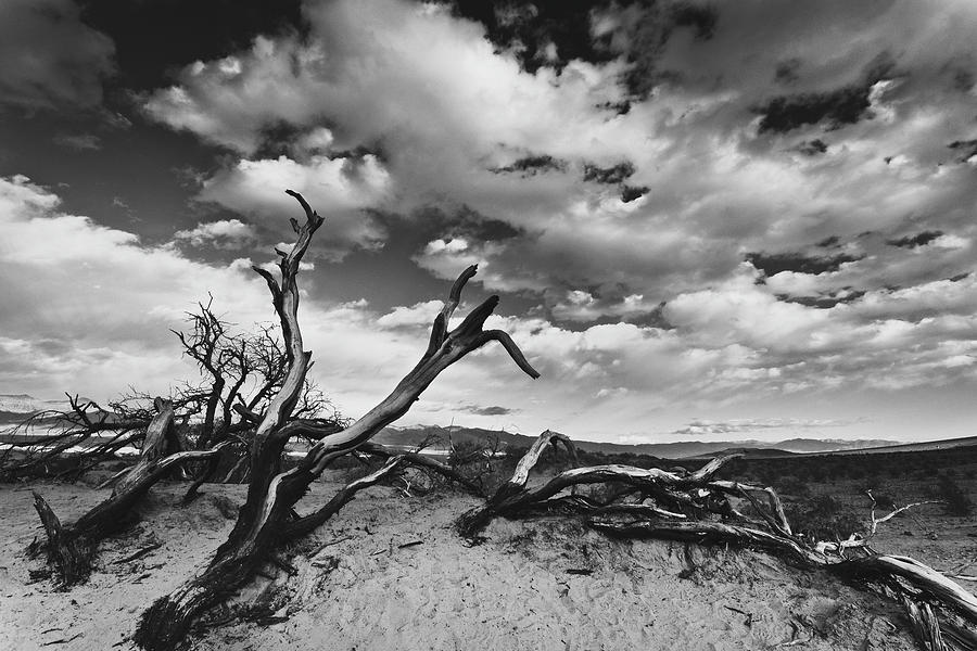Landscape Photograph - Dead Trees at Mesquite Dunes by Nathan Spotts