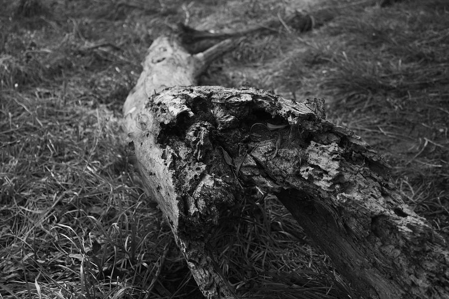 Nature Photograph - Dead Wood by Bradley Nichol