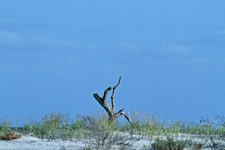 Beach Photograph - Dead Wood by Linda C Johnson
