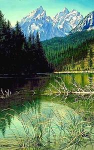 Deadfall On String Lake Painting by Al Feldstein