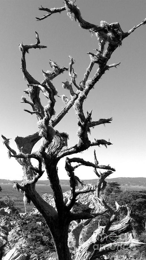 Deadwood Photograph