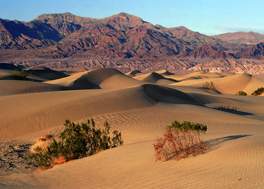 Desert Photograph - Death Valley Dunes by Tom Kidd