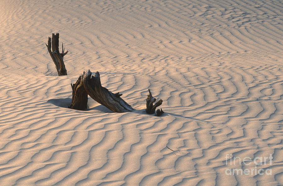 Death Valley Photograph - Death Valley Morning by Sandra Bronstein