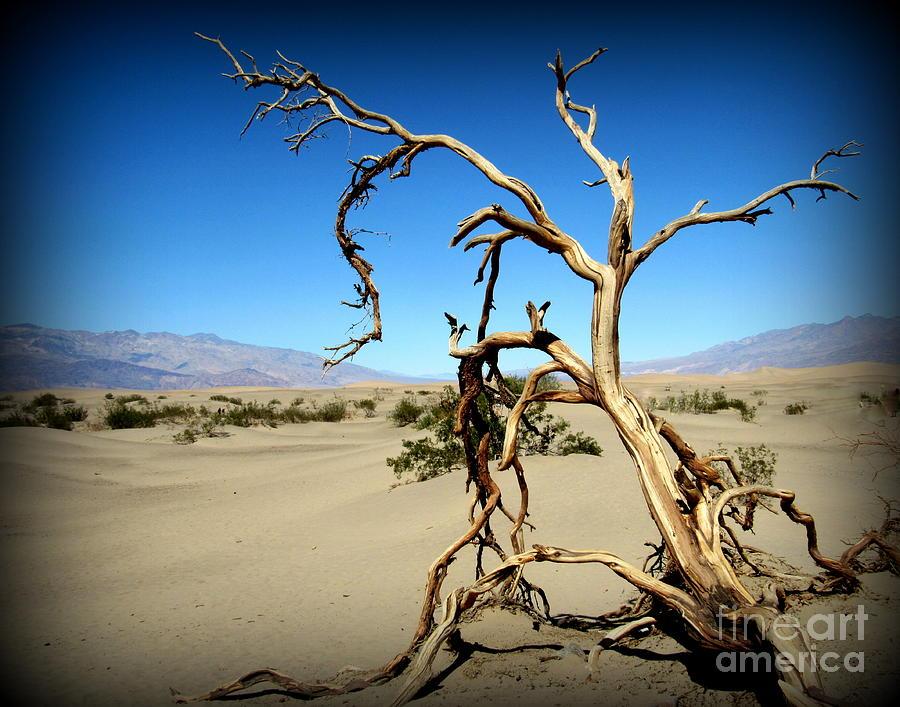 Death Valley Photograph - Death Valley Sand Dunes by Joy Patzner