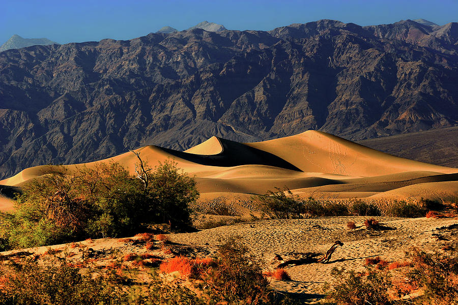 Death Valley National Park Photograph - Death Valleys Mesquite Flat Sand Dunes by Christine Till