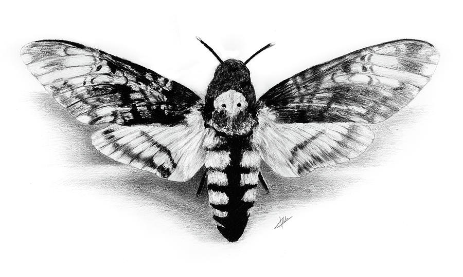 Artwork Drawing - Deathhead Hawk-moth by Christian Klute