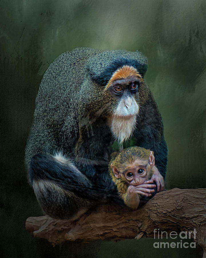 Primate Photograph - Debrazzas Monkey And Baby by Brian Tarr