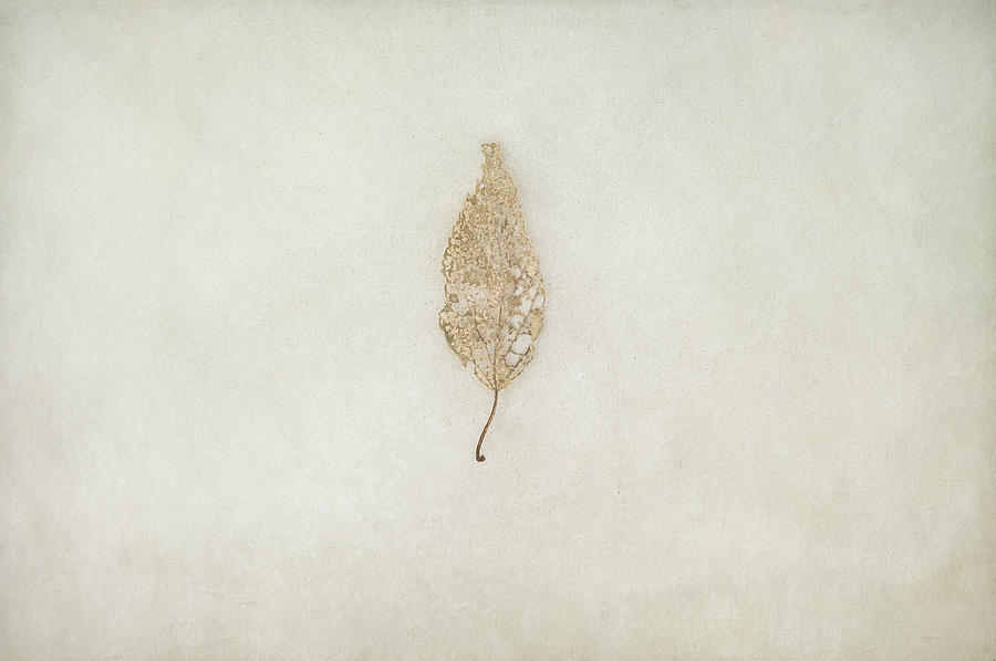 Leaf Photograph - Decay by Scott Norris