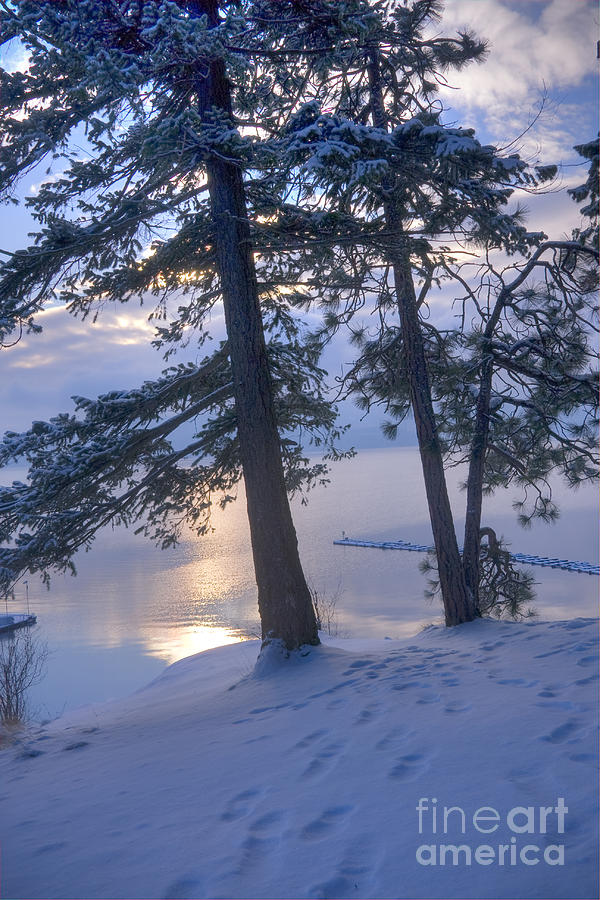 Tree Photograph - December Dawn by Idaho Scenic Images Linda Lantzy
