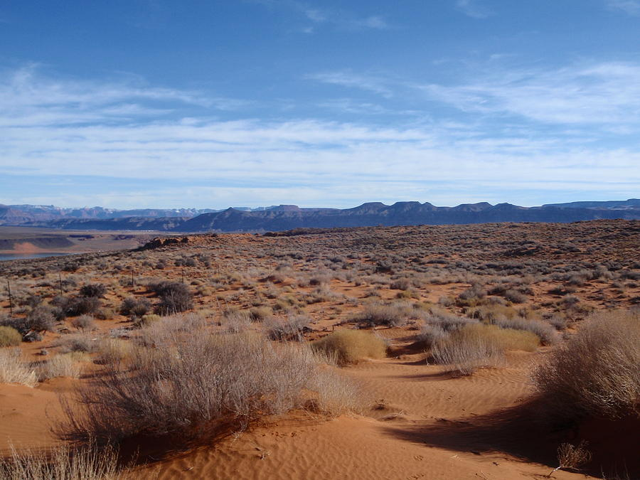 Landscape Photograph - December Desert. by Anthony Haight