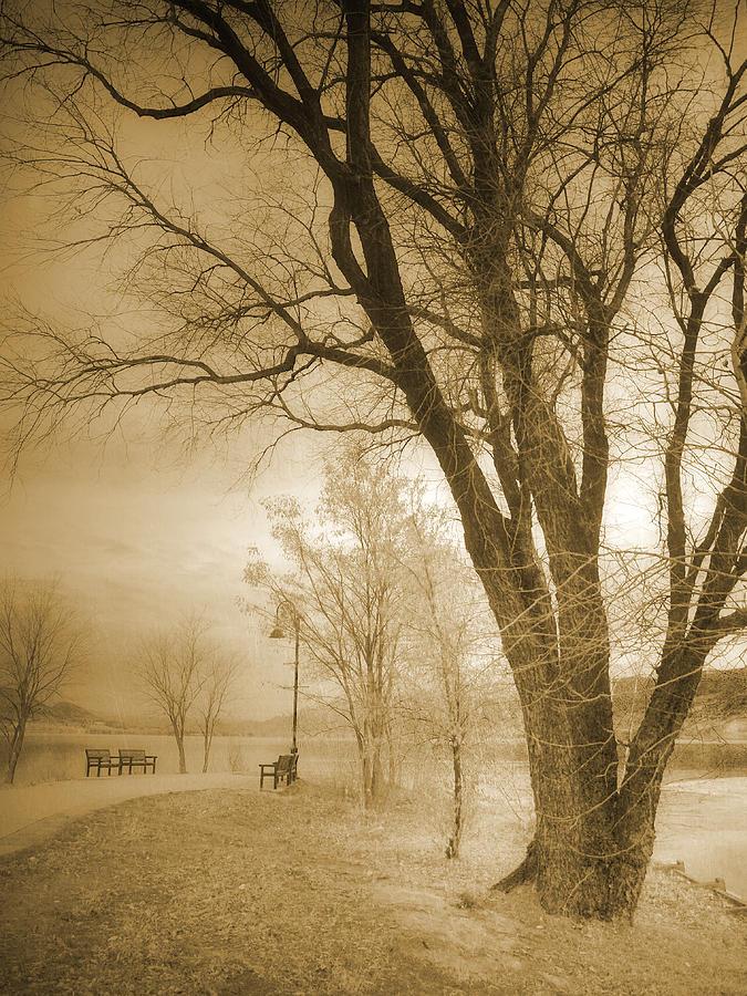 Trees Photograph - December Glow by Tara Turner