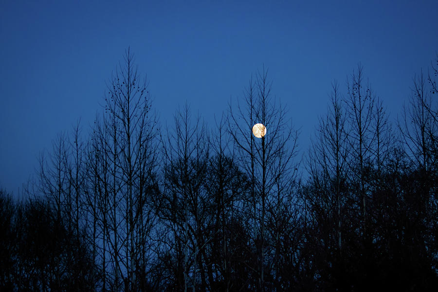Moon Photograph - December Moon by Jeff Phillippi