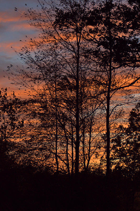 Nature Photograph - December Sunset In Frog Pond Woods by Maria Suhr