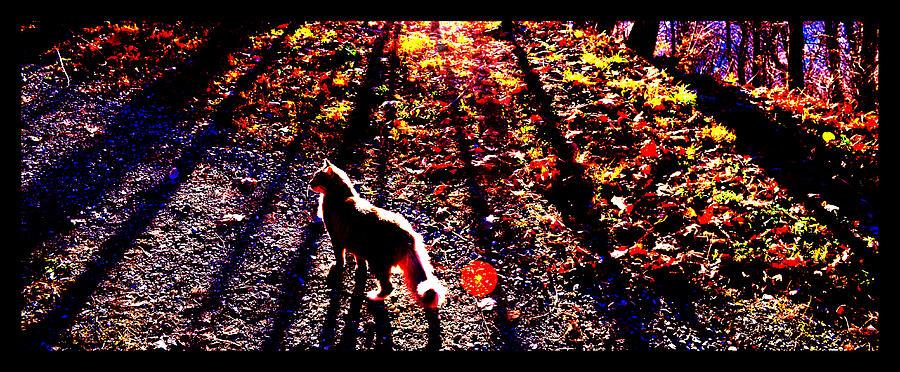 Blue Ridge Mountains Photograph - December Walk In The Blue Ridge by Susanne Still