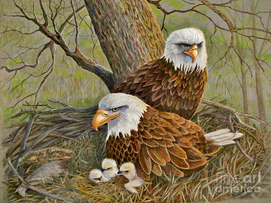 American Bald Eagles Drawing - Decorah Eagle Family by Marilyn Smith