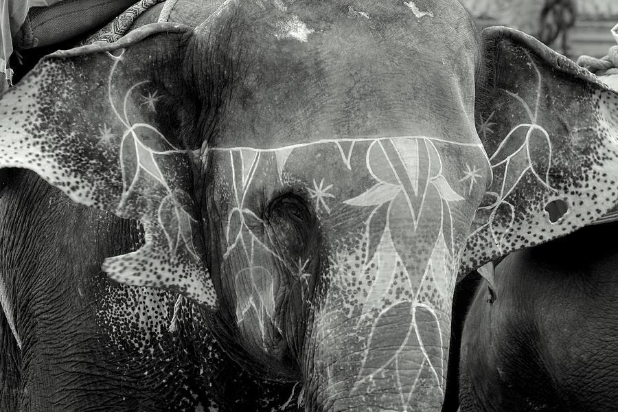 Elephant Photograph - Decorated Elephant by Karan Anand