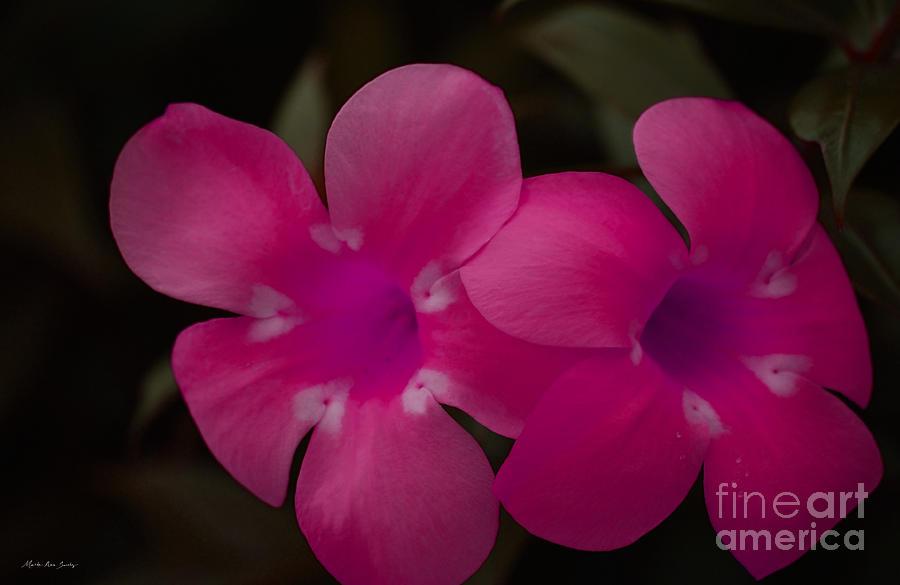 Floral Photograph - Decorative Floral A62917 by Mas Art Studio