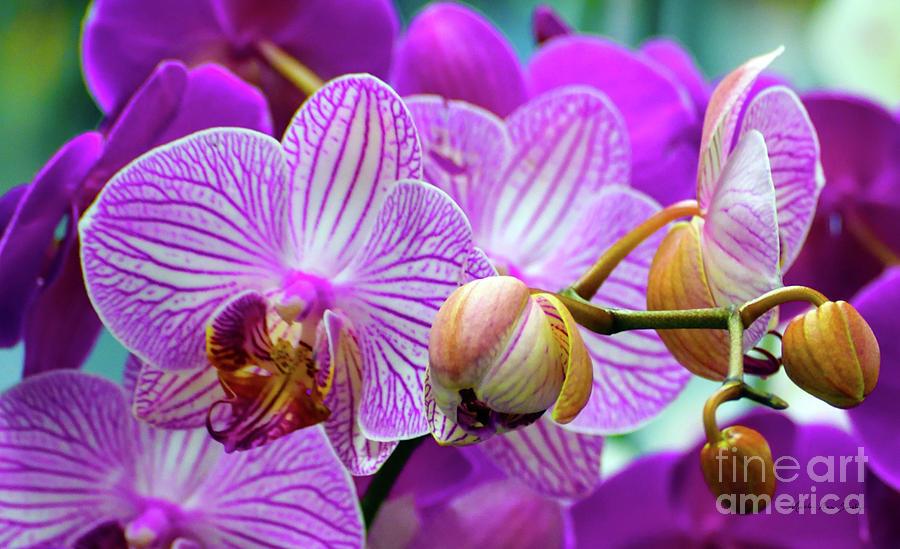 Decorative Fuschia Orchid Still Life by Mas Art Studio