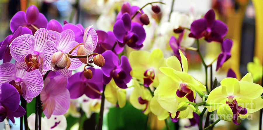 Decorative Orchids Still Life B82418 by Mas Art Studio