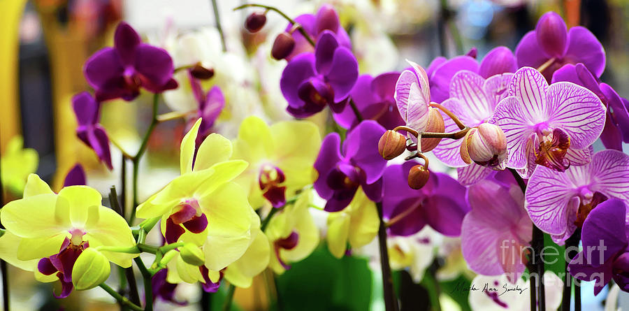 Decorative Orchids Still life C82418 by Mas Art Studio