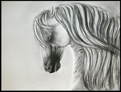 Decoroso Drawing by Crystal Suppes