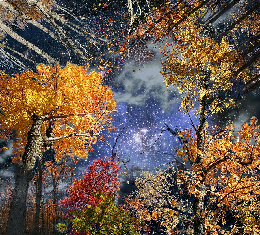 Deep Space Photograph - Deep Canopy by Dave Martsolf