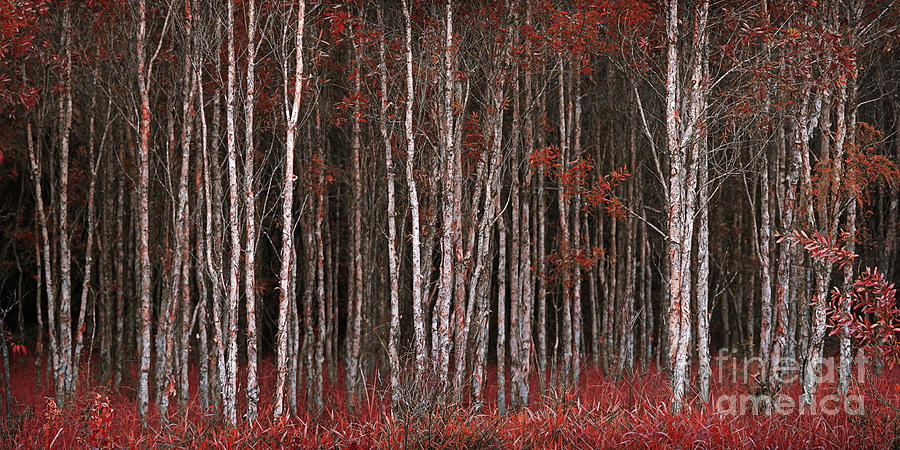 Deep Forest 2 by Russell Brown