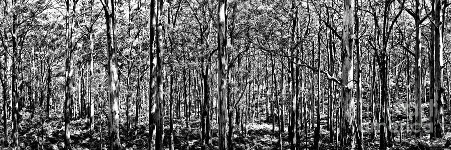 Wa Photograph - Deep Forest BW by Az Jackson