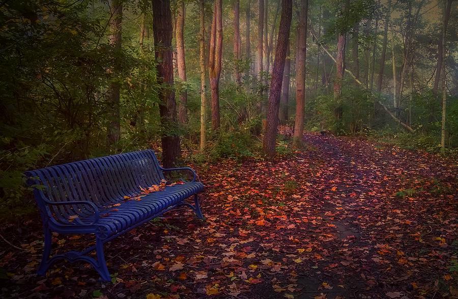 Deep Forest Photograph