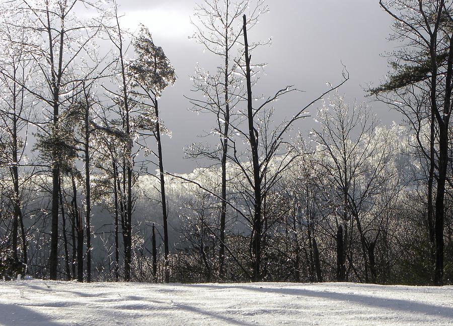 Frozen Photograph - Deep Freeze by Cindy Gacha