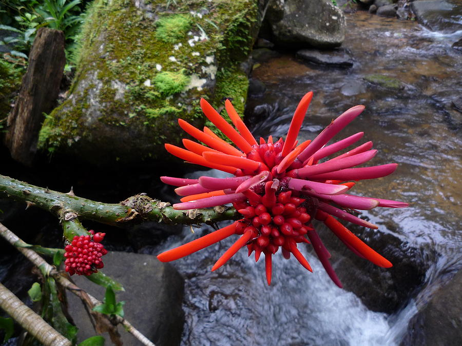 Tropical Flora Photograph - Deep In The Forest No.2 by Gregory Young